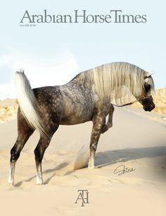 beautiful <3 ~ Dapple Gray Arabian Beauty