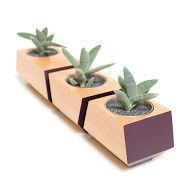 Boxcar 3-Piece Douglas Fir Pot Planter Set