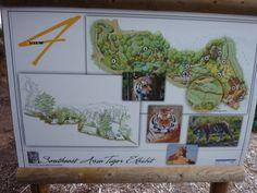 San Diego Zoo Safari Park Tiger Trail (Version 2.1) San Diego Zoo, Museums, Parks, Safari, Trail, Gallery Wall, Animals, Decor, Animales
