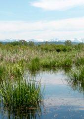 UW Josh Lawler's lab: Landscape Ecology and Conservation Ecology, Conservation, Lab, Trees, Mountains, Landscape, Nature, Scenery, Naturaleza