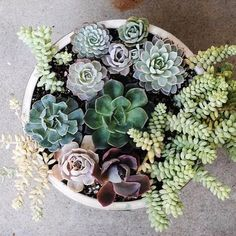Succulent perfection is possible & this arrangement comes pretty close (Photo: rootedinmoss.com)