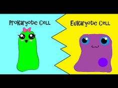 ▶ Are You Team Prokaryote or Team Eukaryote? - Great for understanding differences in kingdoms