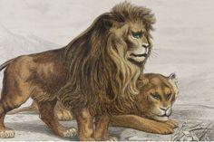 BUFFON : Galerie d'histoire naturelle tirée des oeuvres complètes de Buffon  - Edition-Originale.com