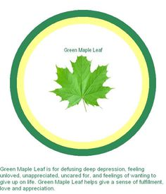 Green Maple Leaf is for defusing deep depression, feeling unloved, unappreciated, uncared for, and feelings of wanting to give up on life. Green Maple Leaf helps give a sense of fulfillment, love and appreciation.