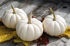 David's Garden Seeds Pumpkin Mini Casperita (White) 25 Non-GMO, Hybrid Seeds Growing Vegetables, Fruits And Vegetables, Garden Seeds, Fruit And Veg, Halloween Treats, Thanksgiving, Pumpkin, Mini, Food