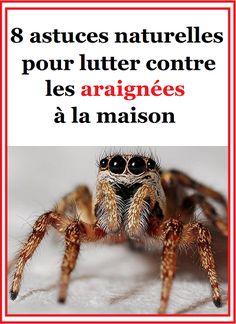 Malheureusement, l'arachnophobie fait qu'on met difficilement sa peur de côté. De fait, on oublie que les araignées sont très utiles dans nos maisons. Plutôt que de les tuer, il peut être utile d'apprendre à utiliser une astuce naturelle afin de les repousser hors de votre domicile. Voici des solutions naturelles de grand-mère en prévention contre les araignées en cas d'invasion.