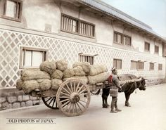 1890's. Bull Cart Load with Rice. A man stands next to an oxcart loaded with tawara (俵, straw rice bags). Tawara (also: hyo) were used for holding rice, charcoal or grain. A rice field of 1,000 square meters (10 ares) would normally yield about seven tawara. Until the Meiji Period (1868-1912), rice was not just food, but also currency.