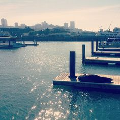 Pier 39, San Fran