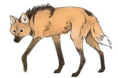 Check out this step-by-step process to #draw #ManedWolf!