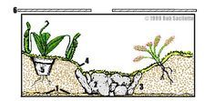 Terrarium construction and care, for carnivorous plants