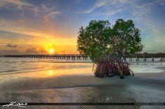 Jensen Beach Florida Mangrove at Indian Riverside Park Martin Co