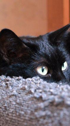 720x1280 Wallpaper gato, preto, cara, mentiras