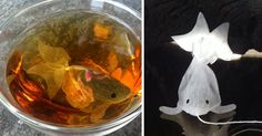 Beautiful goldfish-shaped teabags