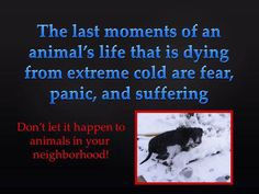 """BROUGHT TO YOU BY THE RESCUE ME OHIO """"HELP ME HOUR""""  Report it!"""