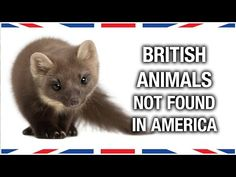 British Animals Not Found in the United States - Neatorama