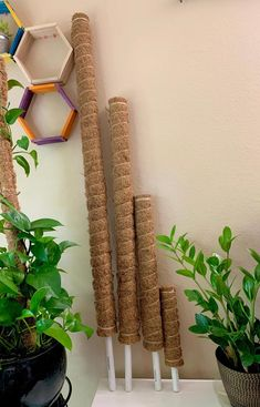 Musgo Sphagnum, Growing Ginger Indoors, Garden Deco, Pvc Pipe, Growing Tree, Container Gardening, Gardening Tools, Green Tips, Outdoor Plants