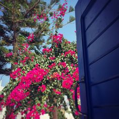 #cyclades #greece Greece, Plants, Red, Greece Country, Plant, Planting, Planets