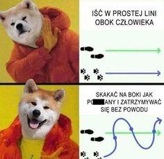 Funny Lyrics, Polish Memes, Weekend Humor, Past Tens, Funny Mems, Nyan Cat, Quality Memes, Wtf Funny, Best Memes