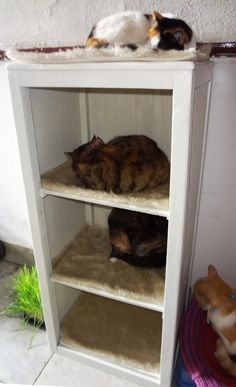 ♥ I'll have to try this, with 3 cats it will save floor space! Combine the old dresser drawers idea with this one and I have a kitty heaven! Cat Apartment, Living With Cats, Cat Hacks, Cat Perch, Cat Enclosure, Animal Projects, Diy Projects, Cat Dog, Outdoor Cats