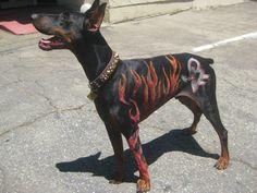 Doberman Creative Grooming with airbrush SBFreaks logo & Flames