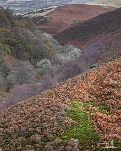 Colourful Clough - In the Landscape