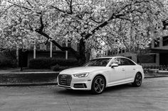 2017 Ibis White Audi A4 | Audi Seattle | Seattle, WA | audiseattle.com