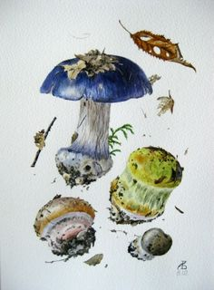 #watercolor #mushrooms Александр Вязьменский