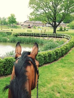 When they love their job, they tell you. #DecoPony #CustomEquestrianAccessories #HorseShow http://www.decopony.com