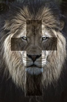 Be strong like a lion! Christ is your shield!