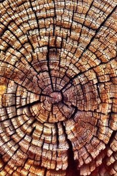 New Ideas For Nature Texture Pattern Fractals Natural Forms, Natural Texture, Natural Structures, Patterns In Nature, Textures Patterns, Nature Pattern, Motifs Organiques, Fractals In Nature, Art Grunge