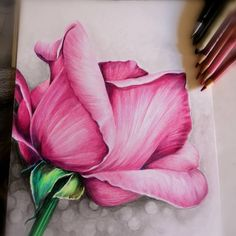 I like these bright colors. I like these bright colors. Colored Pencil Artwork, Coloured Pencils, Pencil Art Drawings, Art Drawings Sketches, Pencil Sketching, Drawing Faces, Art Illustrations, Realistic Flower Drawing, Realistic Drawings