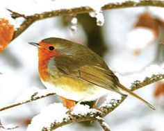 The Best Charity Christmas Cards Charity Christmas Cards, Robin, Foundation, British, Animals, Winter, Blog, Winter Time, Animales