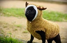 pug-outfit-style-dog.jpg (500×321)