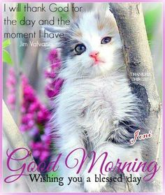 Good morning have a blessed day