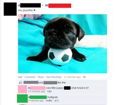 What bread is your dog? The Most Outstanding Comments Ever Left On A Facebook Photo | Happy Place