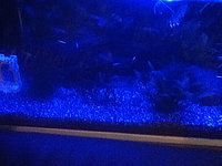 Led strip aquarium verlichting als aanvulling op Tl dagverlichting