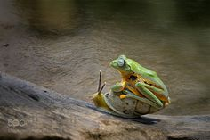 animals, frogs, snails, hitching a ride Nature Animals, Animals And Pets, Baby Animals, Wild Animals, Funny Frogs, Cute Frogs, Cute Funny Animals, Funny Animal Pictures, Beautiful Creatures