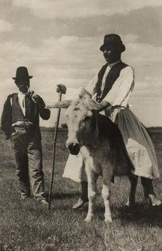 Hungary postcard Shepherd of Bugac donkey 163900 Hungary, Beautiful People, Cow, Horses, Culture, Traditional, Black And White, History, Donkeys