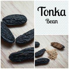 Tonka beans fdating