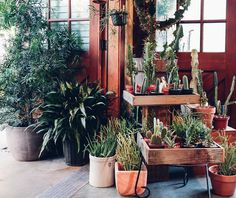 Here are some plants for your Saturday morning 😊🌵