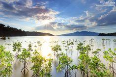 Triboa Mangrove Park, Subic Bay, Luzon, Philippines