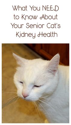 Half of all senior cats develop kidney disease. Ask your vet about the IDEXX SDMA screening test and catch it before it gets out of control! #askyourvet #ad