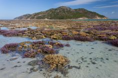 A coral garden. The lowest tide I have ever seen at Lizard Island on the Great Barrier Reef - Imgur