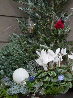 Holiday Container Gardens - landscape - seattle - Le jardinet