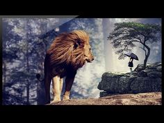 Photoshop: How to make a photo manipulation between the little girl and a lion - YouTube