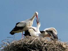 Stork by Sofia Russ