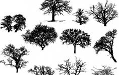 Vector Art: Trees - Free landscape,trees,Silhouettes, Vector by Ars Grafik and more and are constantly expanding our content with exclusive files. Landscape Silhouette, House Silhouette, Forest Silhouette, Palm Tree Silhouette, Leaf Silhouette, Silhouette Vector, Vector Trees, Vector Art, Sketch Free