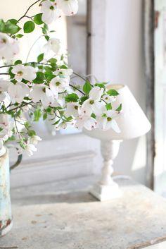 Dogwood blossoms...my favorite