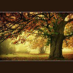I want to live under this tree. Castanheiros; Zedes; Carrazeda de Ansiães; Portugal.