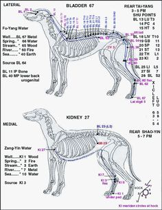 . . .FIREBERT: Acupuncture (acupressure) points on dogs and cats.